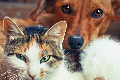 Trust Your Beloved Pet to the Most Friendly, Caring Kalamazoo Animal Hospital