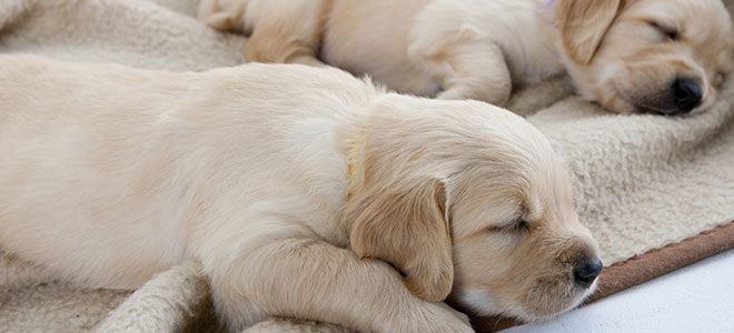 Care for Puppies and Kittens