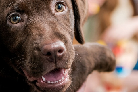 Why it is Essential to Seek Out Pet Vaccination for Your New Dog or Cat